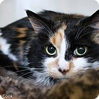 Adopt A Pet :: Button - Ann Arbor, MI