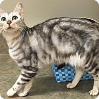 Adopt A Pet :: Cleo - Davis, CA