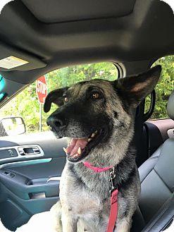 German Shepherd Dog Mix Dog for adoption in Greeneville, Tennessee - Naomi