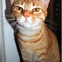 Adopt A Pet :: Scarlett FE1-7522 - Thibodaux, LA