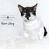 Adopt A Pet :: Roar-Shaq - Houston, TX