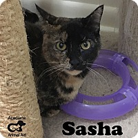Adopt A Pet :: Sasha - Carencro, LA