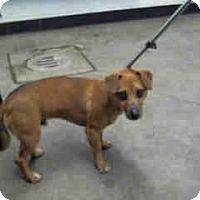 Adopt A Pet :: Winston - Morgan Hill, CA