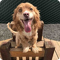 Adopt A Pet :: Zen - Lomita, CA