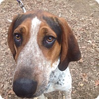 Adopt A Pet :: McCoy - Goodlettsville, TN
