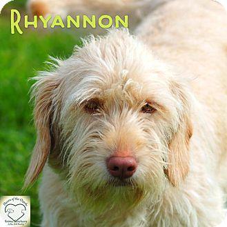 Basset Hound/Terrier (Unknown Type, Small) Mix Dog for adoption in Washburn, Missouri - Rhyannon
