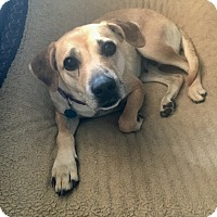 Adopt A Pet :: Holly - Weatherford, TX