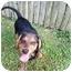 Photo 2 - Terrier (Unknown Type, Medium) Mix Puppy for adoption in Cincinnati, Ohio - Maxwell