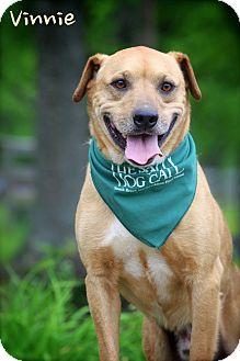 Shepherd (Unknown Type) Mix Dog for adoption in Wilmington, Delaware - Vinnie