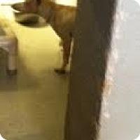 Adopt A Pet :: Cash - Athens, GA