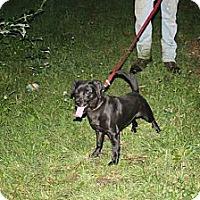Adopt A Pet :: Misha - Minneapolis, MN
