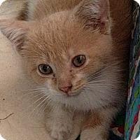 Adopt A Pet :: Emma - Richfield, OH