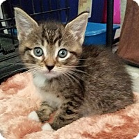 Adopt A Pet :: Amber - Ocala, FL