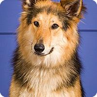 Adopt A Pet :: Ruger - Owensboro, KY