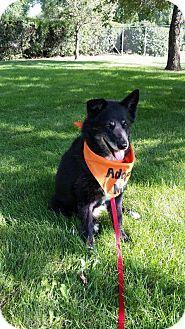 Border Collie Mix Dog for adoption in Saskatoon, Saskatchewan - Precious