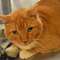 Adopt A Pet :: Walter - Logan, UT