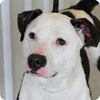 Adopt A Pet :: Lucy - Freeport, IL
