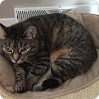 Adopt A Pet :: Ika - McHenry, IL