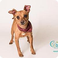 Adopt A Pet :: *PHINEAS - Camarillo, CA