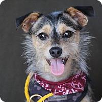 Adopt A Pet :: Cosmo - Fillmore, CA