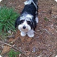 Adopt A Pet :: Bandit - South Amboy, NJ