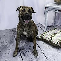 Adopt A Pet :: Tigresa - New York, NY