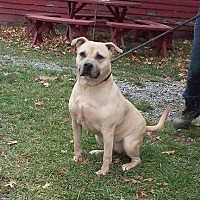 Adopt A Pet :: Pumpkin - Cherry Valley, NY
