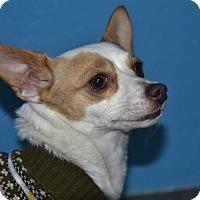 Adopt A Pet :: Cheyenne - Meridian, ID