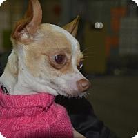 Adopt A Pet :: Cyndee - Meridian, ID