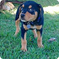 Adopt A Pet :: Yorva - Freeport, ME
