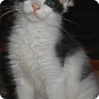 Adopt A Pet :: Ezra - Chattanooga, TN