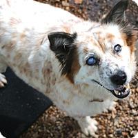 Adopt A Pet :: Eden...MEET ME.. - Norwalk, CT