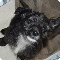 Adopt A Pet :: Benji - Peyton, CO