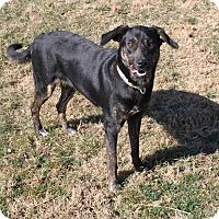 Adopt A Pet :: Baby Girl - Staunton, VA