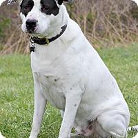Adopt A Pet :: Frankie - Waldorf, MD