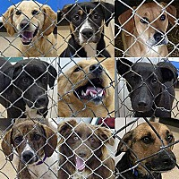 Adopt A Pet :: Are You Looking To Adopt A Dog - Hamilton, ON