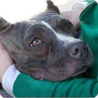 Adopt A Pet :: Karma - San Diego, CA