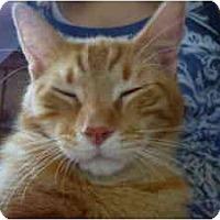 Adopt A Pet :: Manx - Milwaukee, WI