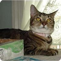Adopt A Pet :: Sally ADOPTION PENDING - Chesapeake, VA