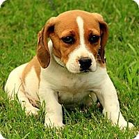 Adopt A Pet :: Neddie - Staunton, VA