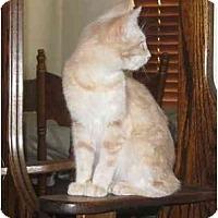 Adopt A Pet :: Rusty - Riverside, CA