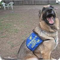 Adopt A Pet :: Chopper - Green Cove Springs, FL