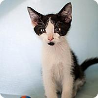 Adopt A Pet :: Zulu - Shelton, WA
