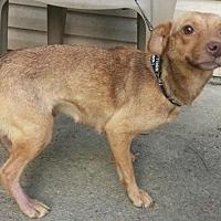 Adopt A Pet :: balline - Prestonsburg, KY