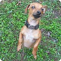 Adopt A Pet :: Mocha - Ormond Beach, FL