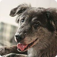 Adopt A Pet :: Pepper - Canoga Park, CA