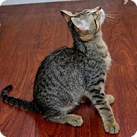 Adopt A Pet :: Emma - Davis, CA