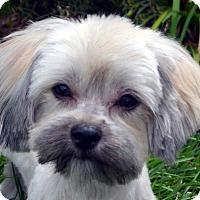 Adopt A Pet :: Haley-Not taking any more apps - Bridgeton, MO