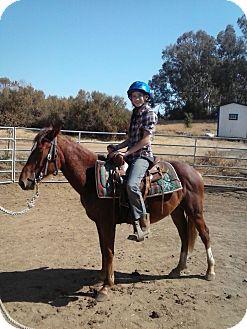 Quarterhorse Mix for adoption in Sac, California - Jax