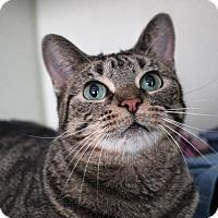 Adopt A Pet :: Vicki Peterson - Chicago, IL
